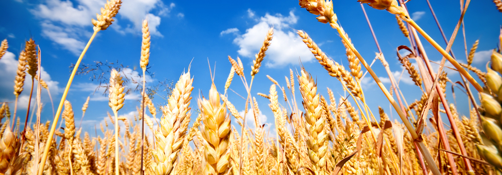 Grain Trading Weather Forecasts